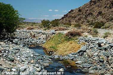 amargosa river california