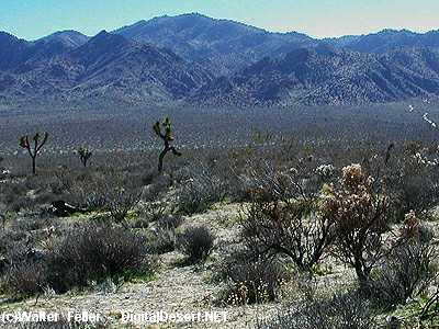 Bajada Mojave Desert Glossary Of Terms And Definitions