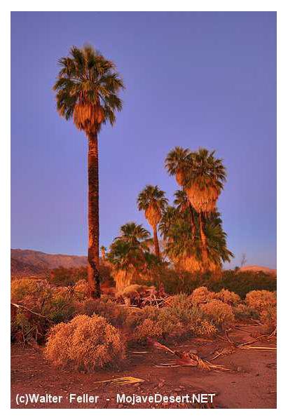 Natural Food Store Palm Desert Ca