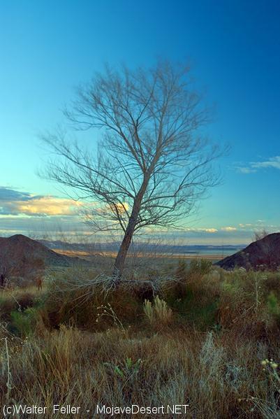 Mojave Desert Trees Desert Plants